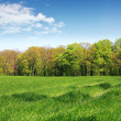 Grassland - beautiful spring landscape — Stock Photo #4817589