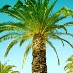 Palm paradise — Stock Photo #4827878