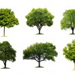 Collection of isolated summer tree — Stock Photo