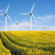 Wind farm with rape field - Stock Photo