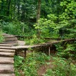 Stock Photo: Wood bridge in forest