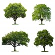 Trees isolated — Foto de stock #5046867