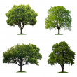 Foto de Stock  : Trees isolated