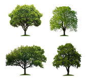 Trees isolated — Stock Photo