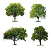 árvores isoladas — Foto Stock