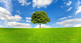 Maple tree on a meadow against a blue sky — Stock Photo