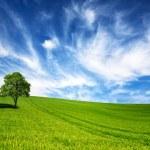 Green tree in a field on blue sky — Stock Photo #5221227