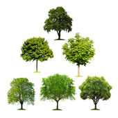 Collection of isolated trees — Stock Photo