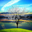 Blossoming tree at sunset - Stock Photo