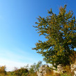 Autumn tree on limestone rocks - Stock Photo