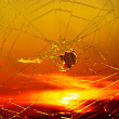 Spider and spider web - Stockfoto
