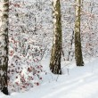 Stock Photo: Winter birch forest