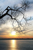 Old tree over a frozen lake at sunset — Stock Photo