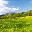 spring landscape — Stock Photo #4025421