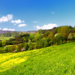 Spring landscape — Stock Photo