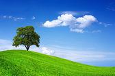 Beautiful oak tree on green field — Photo