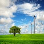 Ecology - Wind of change — Stock Photo #4071618