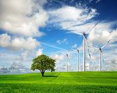 Ecology - Wind of change — Stock Photo