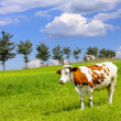 Stock Photo: Cow and ecology landscape