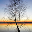 Stock Photo: Silhouette tree at sunset