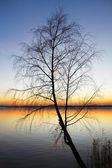 Silhouette tree at sunset — Stock Photo