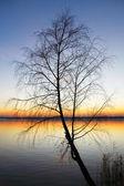 дерево силуэт на закате — Стоковое фото