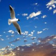 Seagull on beautiful sea sunset — ストック写真