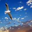 Seagull on beautiful sea sunset — Foto de Stock