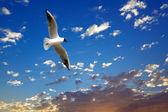 Seagull on beautiful sea sunset — Stock Photo