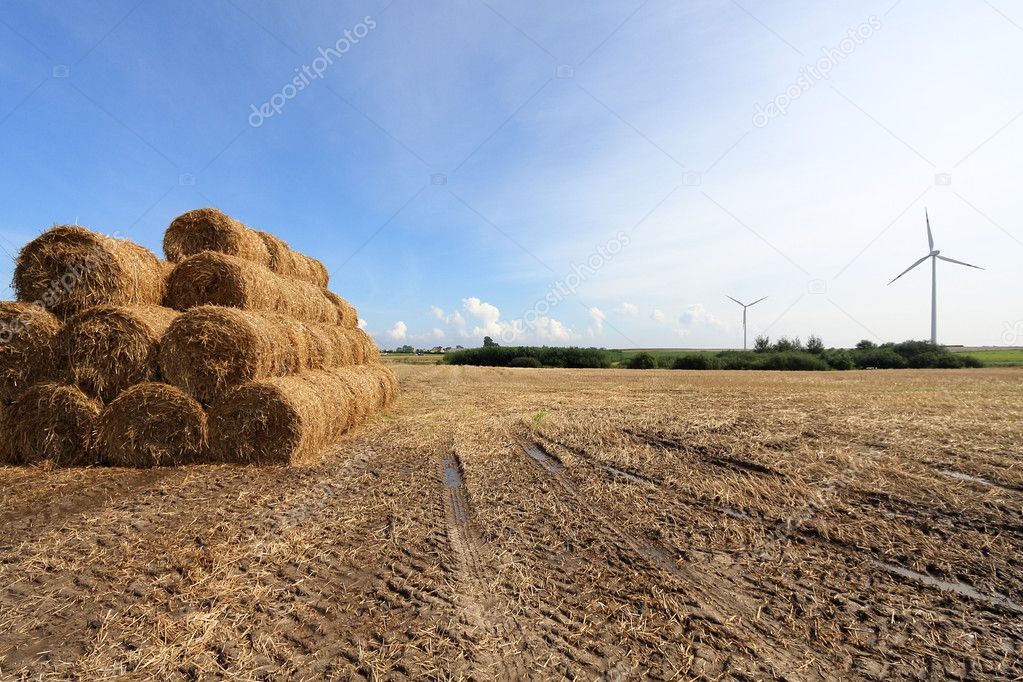 Harvest Wind — Stock Photo #4425832