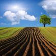 Agricultural landscape - Stockfoto