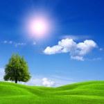 Field and sunny sky — Stock Photo #4594806
