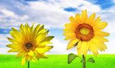 Słoneczny transparent — Zdjęcie stockowe