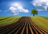 Agricultural landscape — Stock Photo