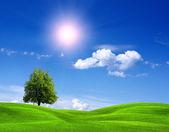 Alan ve güneşli gökyüzü — Stok fotoğraf