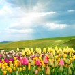 Stock Photo: springtime