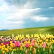 Springtime — Stock Photo
