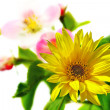 Foto de Stock  : Spring flowers background