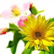Stock Photo: Spring flowers background