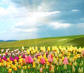 Springtime — Stock fotografie