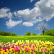 Royalty-Free Stock Photo: Beautiful spring field