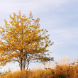 Autumnal tree — Stock Photo #4723714
