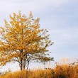 Stock Photo: Autumnal tree