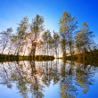 Golden forest on blue sky — Stock Photo