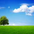 Green tree in summer — Stock Photo