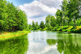 Green nature landscape — Foto Stock
