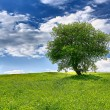 Tree on spring meadow — Foto Stock