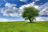 Tree on spring meadow — Stock Photo