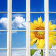 Stock Photo: Sunny Window