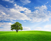 Spring landscape with oak tree and blue sky — Stock Photo